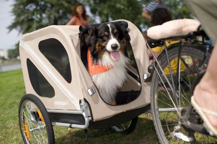 Blog_Bicyklujeme so psom_foto